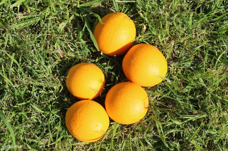 Group of Oranges
